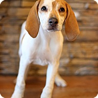 Adopt A Pet :: Clove - Waldorf, MD