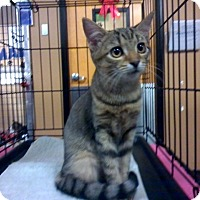 Adopt A Pet :: CLEMENTINE - Raleigh, NC