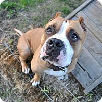 Adopt A Pet :: Lolo - Oakland, CA