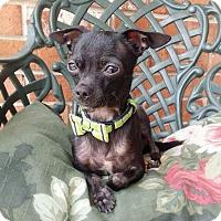 Adopt A Pet :: Tito - Baton Rouge, LA
