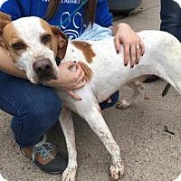 Adopt A Pet :: Chris - Voorhees, NJ