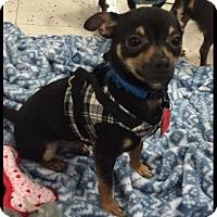 Adopt A Pet :: Tiny - Hurst, TX