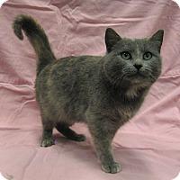 Adopt A Pet :: Addison - Redwood Falls, MN