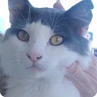 Adopt A Pet :: Leo - Pasadena, CA