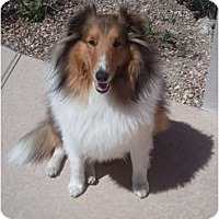 Adopt A Pet :: Freddie - apache junction, AZ