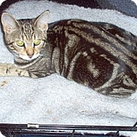 Adopt A Pet :: Oakley - Toronto, ON