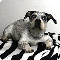 Adopt A Pet :: Wyatt - Seattle, WA