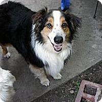 Adopt A Pet :: Fozzie Bear - Savannah, GA