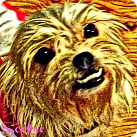 Adopt A Pet :: Sookie-VA - Mays Landing, NJ
