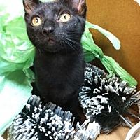 Adopt A Pet :: Deacon - Trevose, PA