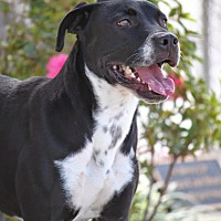 Adopt A Pet :: BRANTLEY GILBERT - Wynne, AR