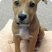 Adopt A Pet :: Leroy - North Olmsted, OH