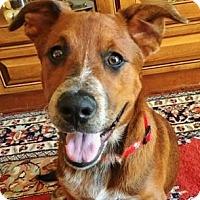 Adopt A Pet :: Auggie - Irvine, CA