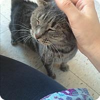 Adopt A Pet :: Farrah Fawcett - Richboro, PA