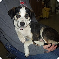 Adopt A Pet :: LILLY - Medford, WI