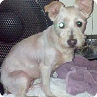 Adopt A Pet :: Nikki - Boulder, CO
