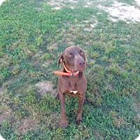 Adopt A Pet :: Jagger - Oak Ridge, NJ