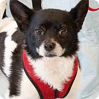 Adopt A Pet :: Romeo - Lansing, MI