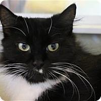 Adopt A Pet :: Nachtisch - Lincoln, CA