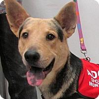 Adopt A Pet :: Bullit - Conroe, TX