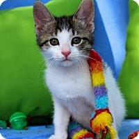 Adopt A Pet :: PIXIE - jacksonville, FL