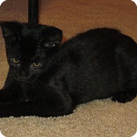 Adopt A Pet :: Jura - Colorado Springs, CO
