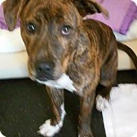 Adopt A Pet :: Garth - Franklin, NH