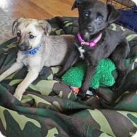 Adopt A Pet :: Thing 1 and Thing 2 - Wyoming, MI