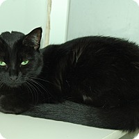 Adopt A Pet :: Sammi - Bradenton, FL