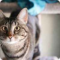Adopt A Pet :: Pepper - Boise, ID