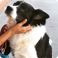 Adopt A Pet :: IRVING (video) - Los Angeles, CA