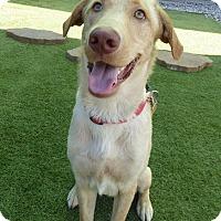 Adopt A Pet :: Rem - Towson, MD