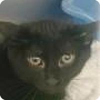 Adopt A Pet :: Tiger - Paducah, KY