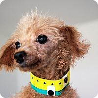 Adopt A Pet :: Charlene - Shallotte, NC