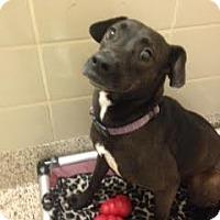 Adopt A Pet :: Roxy - Aiken, SC