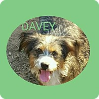 Adopt A Pet :: Davey - Burlington, VT
