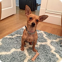 Adopt A Pet :: Archie - San Francisco, CA