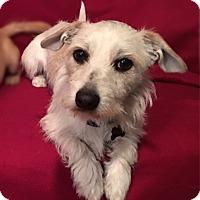 Adopt A Pet :: Murphy - Santa Clara, CA