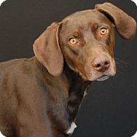 Adopt A Pet :: Ruger - Newland, NC