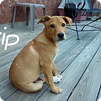 Adopt A Pet :: Skip - Madisonville, TX