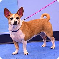 Adopt A Pet :: Suzie - Scottsdale, AZ