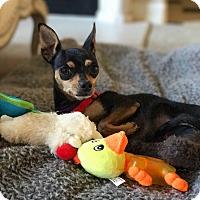 Adopt A Pet :: Minny - Thousand Oaks, CA