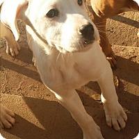 Adopt A Pet :: Merry - Wilminton, DE