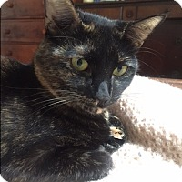 Adopt A Pet :: Annabelle - Harrison, NY