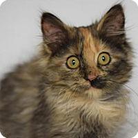 Adopt A Pet :: Tequila Rose - DFW Metroplex, TX