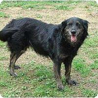 Adopt A Pet :: Thurston - Chattanooga, TN
