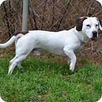 Adopt A Pet :: Pig - Athens, GA