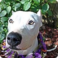 Adopt A Pet :: Eden - Orlando, FL