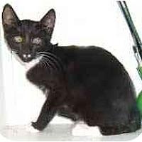 Adopt A Pet :: Charlie Chan - Dallas, TX