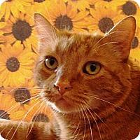 Adopt A Pet :: Maxwell - Albany, NY